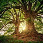 Cherchons nos arbres ….